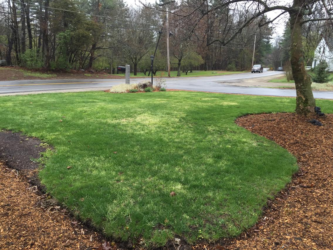 help my lawn is turning white southern nh lawn care